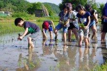☆やんちゃ放課後ひろばがスタートしました〜5月は田植えに挑戦です!:画像