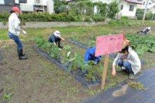 ☆食の安全安心事業 畑の楽耕〜看板を設置しました!:画像
