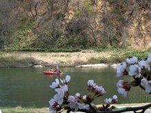 ☆最上川桜遊覧を体験しました〜地域振興事業:画像