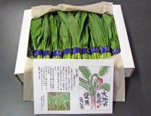 【幻の山菜『行者にんにく』予約承り中】:画像