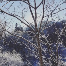 雪国の雪:画像