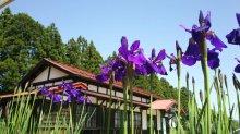 愛(藍)の花咲く:画像