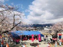 2018置賜さくら回廊オープニングセレモニー「花咲けイベント」開催しました!:画像