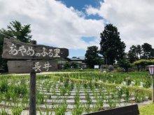 '18あやめ公園開花情報(6月15日):画像