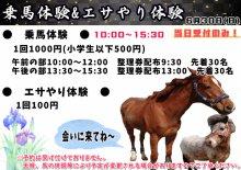 【あやめまつり】乗馬体験&エサやり体験の詳細について:画像
