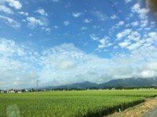 西根の田んぼ:画像