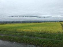 白龍たなびく西根の田んぼ:画像