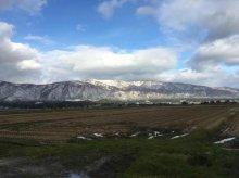白鳥がきて、葉山は白衣:画像