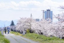 【タクシー/サイクリング】春のオススメツアー企画:画像