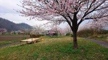 4月17日(日) あいにくの雨で、お花見会場変更です。:画像