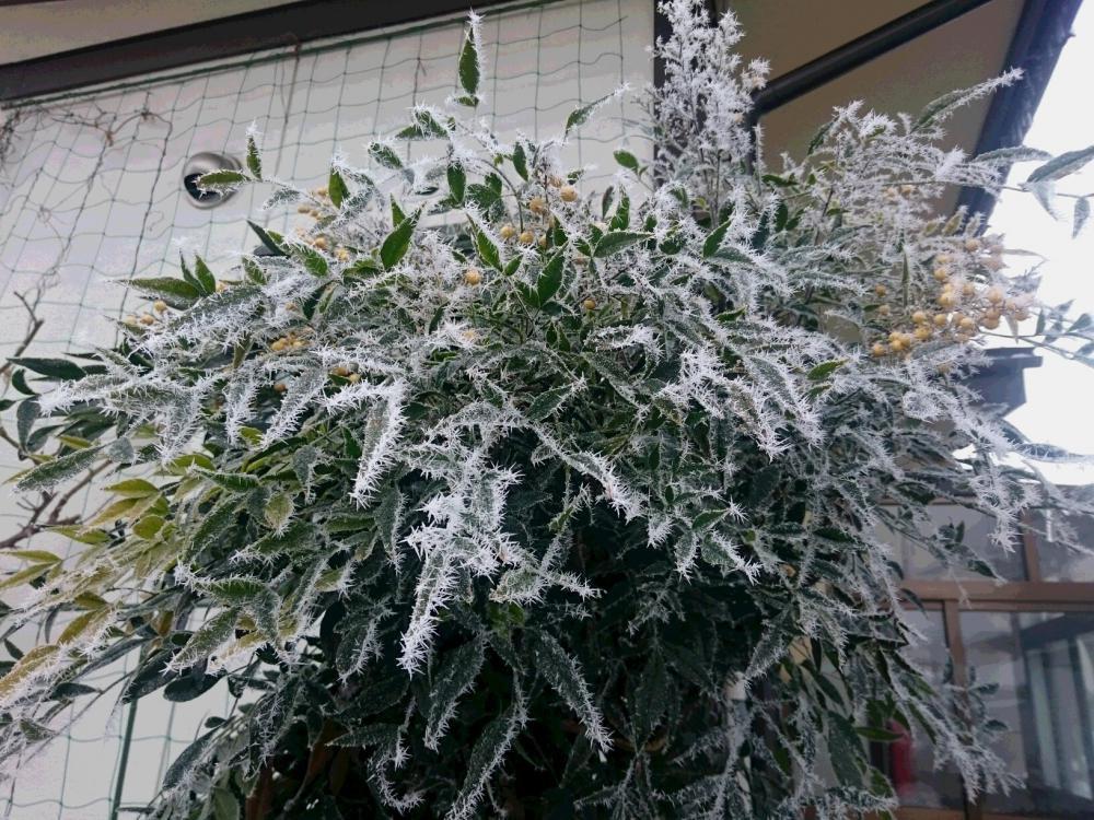 瞬間の 美学に出会う 冬の朝:画像