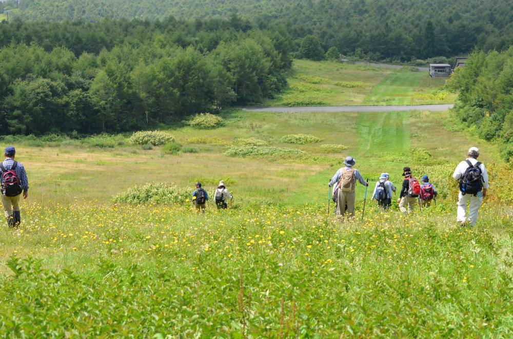 真夏日に 樹氷原コースを 大滑降:画像