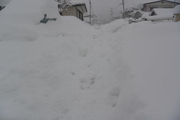 雪の朝 これでいいのか:画像