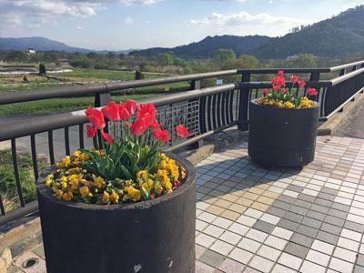 ☆長井橋の花壇は今年もきれいです!:画像