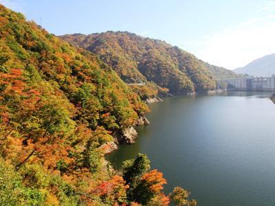【長井ダムの紅葉が見頃です】:画像