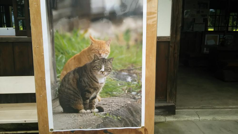 吾輩は猫である:画像
