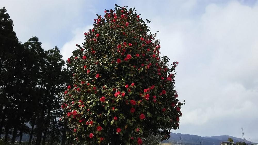 色んな花が美しく:画像