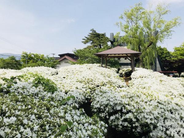 '18つつじ開花状況 (5月15日):画像