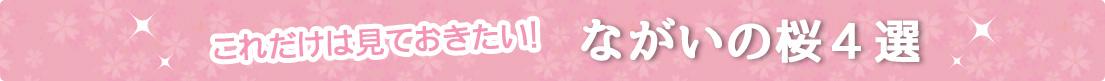 ながい桜4選