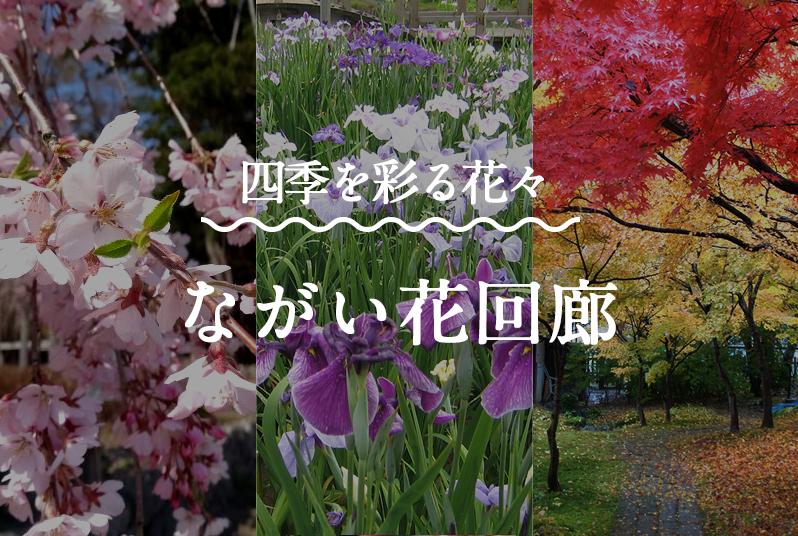 特集|ながい花回廊